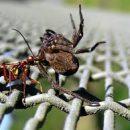 חומר להדברת עכבישים